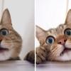 Blogger(Picasa)で画像をアップロードすると暗くなるときの対処方法