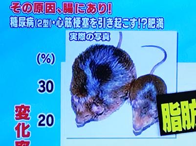 太ったマウス
