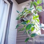 【観葉植物】ハダニ?葉の裏に小さな虫がついている時の駆除・対策法