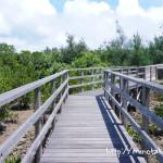 【宮古島】天然記念物が間近で見れる!島尻のマングローブ林