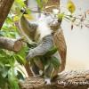 東山動植物園は1日遊べる!イケメンゴリラ・食事・入場料など