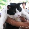 猫と美味しいそば。乃木そば神谷に行ってきました(浜松市引佐町)